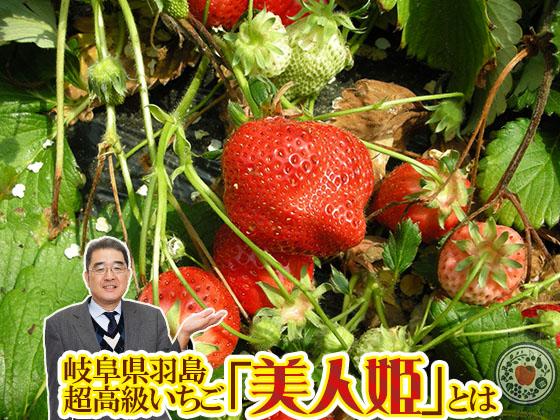 いちご「美人姫」とは!岐阜県の超高級超特大いちごを徹底解説