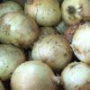 熊本県の特別栽培のたまねぎ「サラたまちゃん」をご存知ですか?