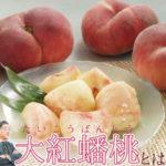 大紅蟠桃という面白い形をした珍しい桃について青果部長が語る!
