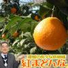 紅まどんなとは。愛媛生まれの希少な柑橘の特長や魅力を徹底解説