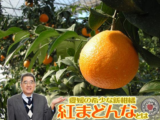 愛媛生まれ愛媛育ちの希少な柑橘「紅まどんな」について青果部長が語ります