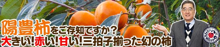 陽豊柿をご存知ですか?大きい!赤い!甘い!三拍子揃った幻の柿
