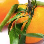 柑橘類の種類をまとめて徹底解説!国産柑橘も輸入柑橘も