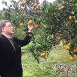 奄美大島の珍しい柑橘「たんかん」産地レポート!杉さんの訪問記