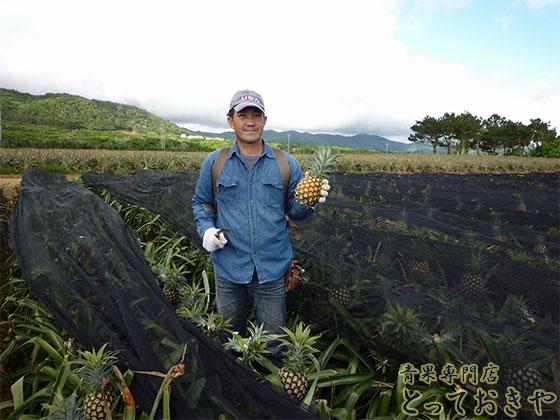 沖縄パインアップルの品種を青果の道40年の男が詳しく語ります(當銘さん)
