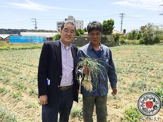 青果部長の沖縄訪問記_島らっきょう畑