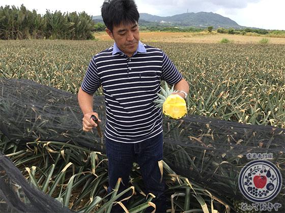 青果部長の沖縄訪問記_當銘さんのティダパイン