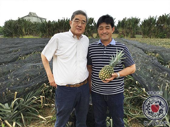 青果部長の沖縄訪問記_當銘さんのパイナップル畑