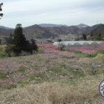 桃の生産量日本一の山梨県を訪問!青果部長杉さんの産直レポート