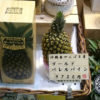 黄金色に輝く沖縄県のパイン「ゴールドバレル」の特長をご紹介!