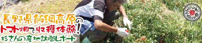 長野県飯綱高原のトマト畑で収穫体験!杉さんの産地訪問レポート