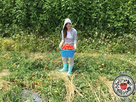 長野県飯綱高原のトマト畑で収穫体験!杉さんの産地訪問レポート_収穫できました!
