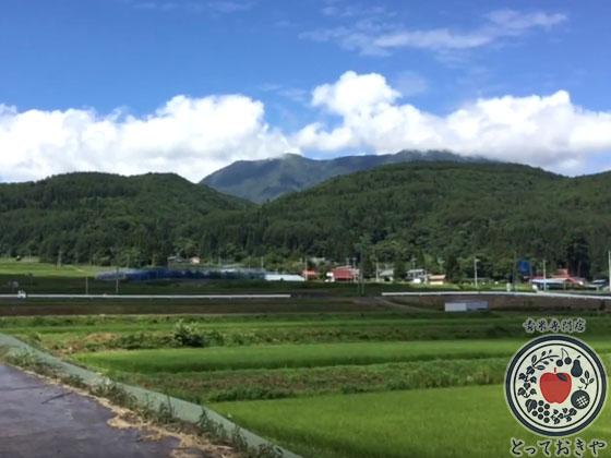 長野県飯綱高原のトマト畑で収穫体験!杉さんの産地訪問レポート_飯綱高原の景色
