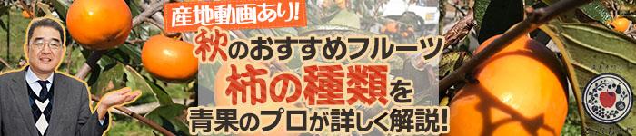 秋のおすすめフルーツ「柿」の種類を青果のプロが詳しく解説!