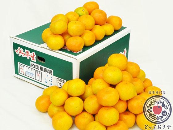 秋冬の人気果物「みかん」のおすすめ4品種を青果部長が推薦_ゆら早生みかん
