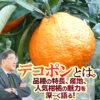 デコポンとは。品種の特長、産地、人気柑橘の魅力を深~く語る!