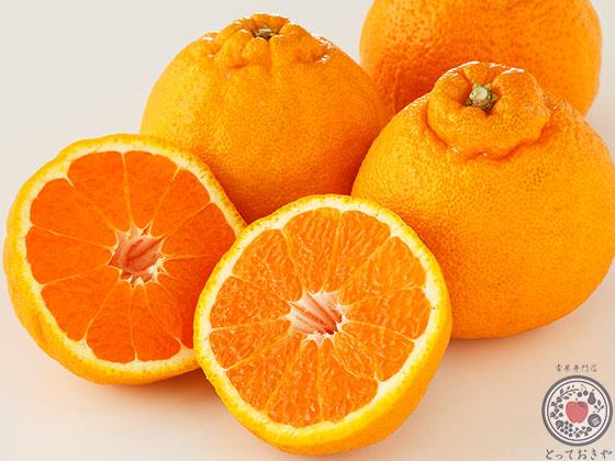 デコポンとは。品種の特長、産地、人気柑橘の魅力を深~く語る!_デコポンとは