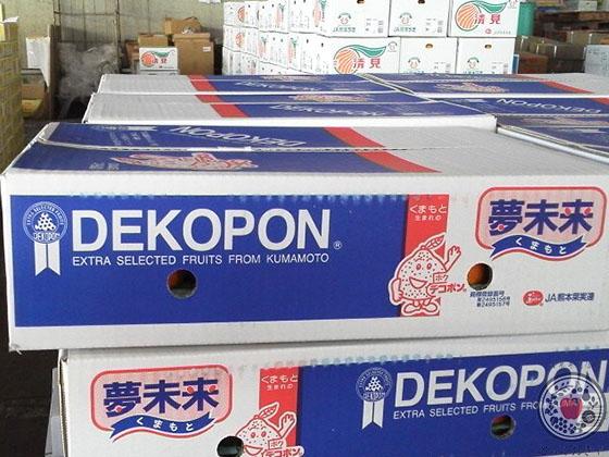 デコポンとは。品種の特長、産地、人気柑橘の魅力を深~く語る!_デコポン箱