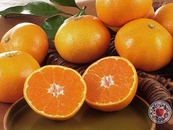 冬の果物まとめ一覧!青果担当者が豆知識満載で語る果物図鑑_みかん