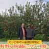 動画あり!長野県飯綱町のリンゴ園へ。とっておきの産地訪問記