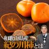 和歌山県産「紀の川柿」とは。品種の特長、産地情報をご紹介!