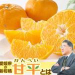 愛媛の人気柑橘「甘平」の品種の特長や生い立ち、産地の栽培とは