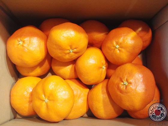 愛媛の柑橘「甘平」とは_箱詰めイメージ