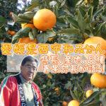 愛媛県西宇和みかんの特長、産地、品種について青果部長が語る!