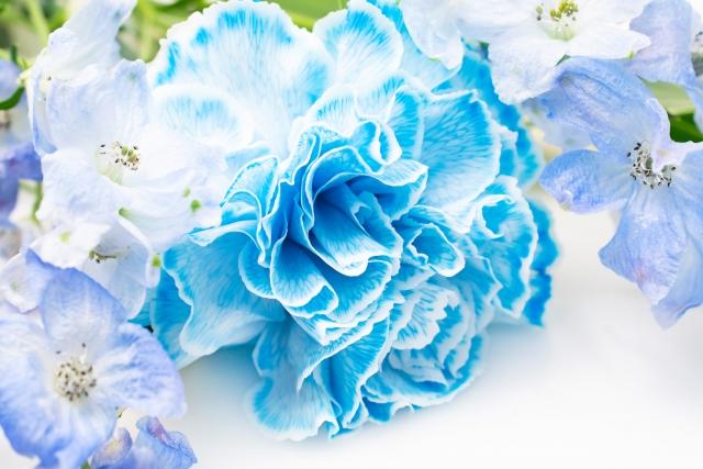 母の日_青いカーネーション
