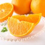 高級柑橘「せとか」!平成生まれの人気スターに迫る