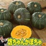 坊ちゃんかぼちゃとは。小さいサイズで人気のかぼちゃをご紹介!