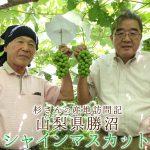 山梨県勝沼のシャインマスカットの産地を青果部長が訪問!